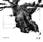 © 'This Tree is Numbered #39' ink on paper Peteris Ciemitis