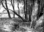 © 'Numbered' 2014 ink on paper Peteris Ciemitis